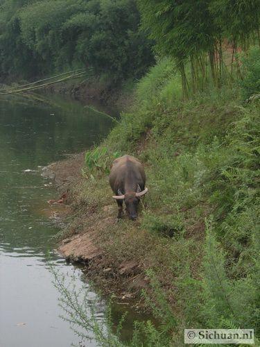http://si-chuan.nl/wp-content/uploads/Sfeer-uit-Sichuan/14-sfeerbeeld-uit-sichuan-23-.jpg